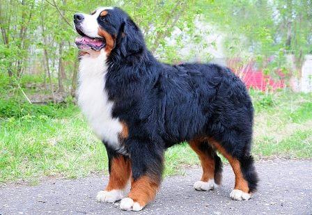 DogsportRu World Dog Sports